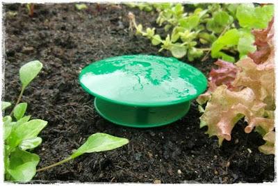 Gartenblog Topfgartenwelt Schädlinge: Schneckenfalle für Schneckenkorn bzw. Schutz für Schneckenkorn
