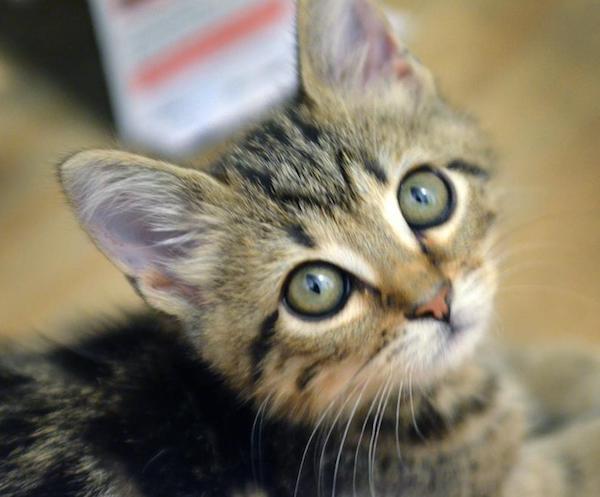 10 أمراض يمكن أن تصيبك بسبب قطك ....  تعرف عليها