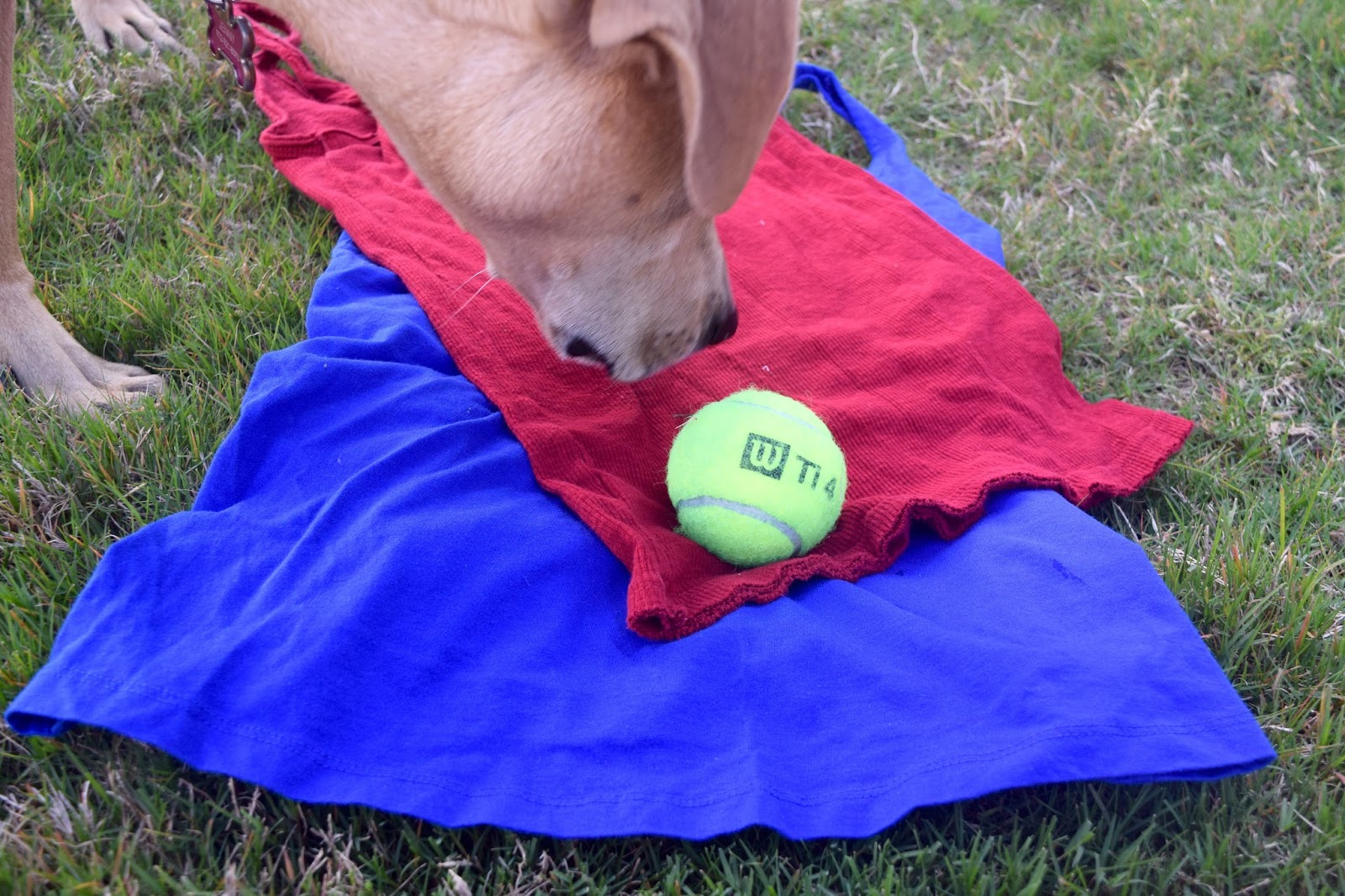 Diy t shirt dog toy for summer with my best girl anchors for T shirt dog toy