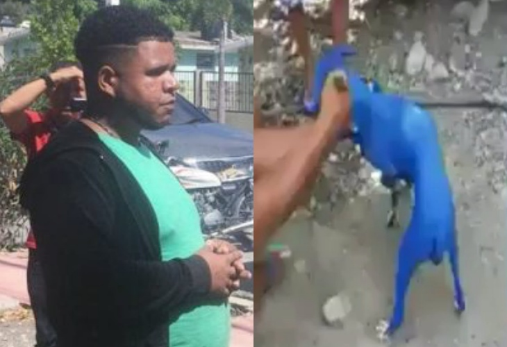 Video: Apresan carajo que pintó a un perro en Azua; dizque quería quitarle la sarna