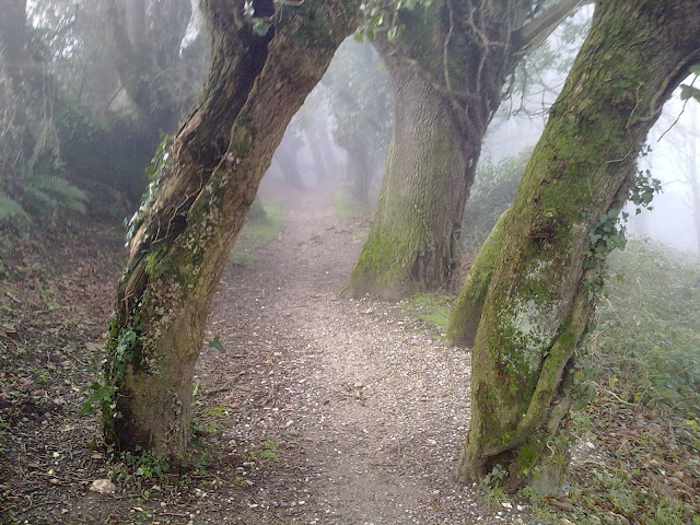 Camino de Santiago en Samos