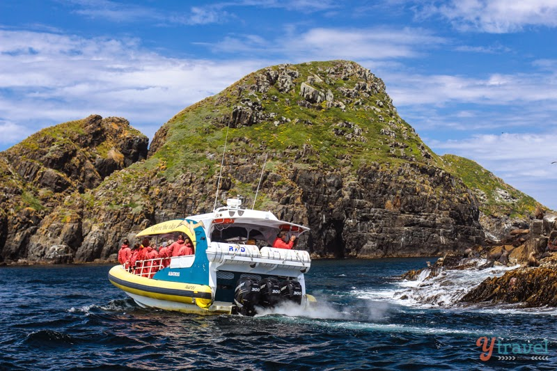 Bruny Island Cruise in Tasmania