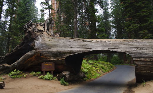 séquoia tunnel