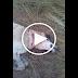 Un nou caz de cruzime de animale, un caine este ucis cu securea. Imagini Socante