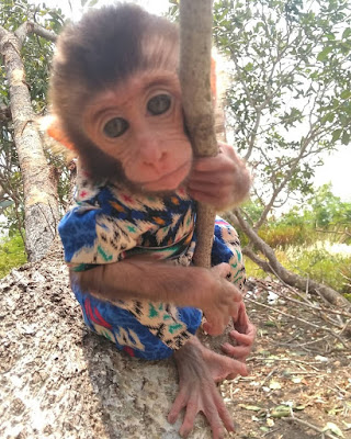 Kisah Monyet dan Angin