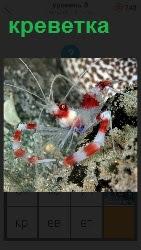 под водой плавает креветка