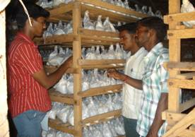 Agro Farming Business In India: Milky mushroom training in south