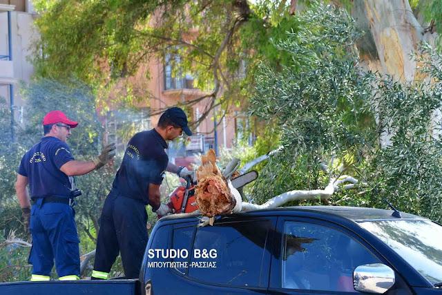 Πτώση μεγάλου δέντρου σε περίπτερο στην περιοχή του Πόρου