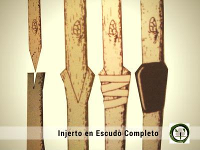 El Injerto en Escudo Completo es un  Injerto de Púa que se practica sobre el portador