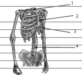 bagian rangka tubuh manusia dan fungsinya
