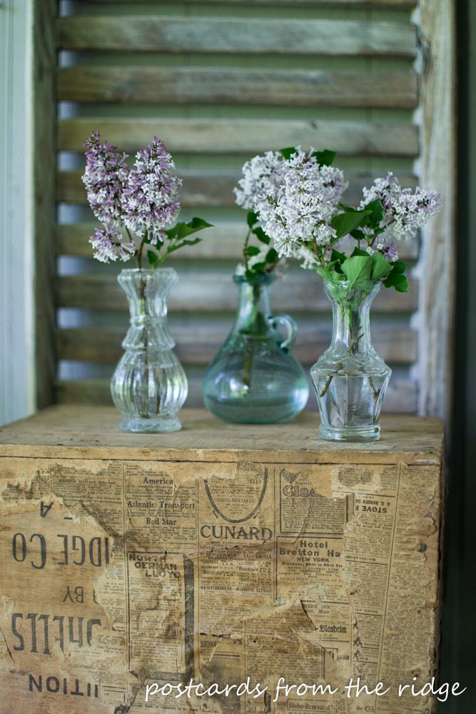 lilacs in glass vases