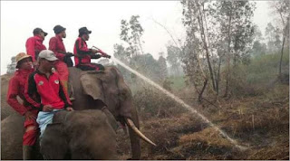 Pasukan gajah