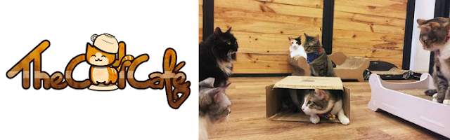 The Cat Cafe logo and photo
