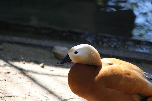 広島市安佐南動物園公園 鳥