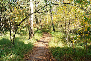 Ein hölzerner Steg führt durch ein Hochmoor. Links und rechts wachsen Bäume, die Sonne strahlt auf das gelbe Herbstlaub.
