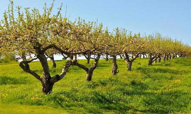 """Νέα ειδικότητα """"Τεχνικός δενδροκομίας και εναλλακτικών δενδρωδών καλλιεργειών"""" στο Δ.ΙΕΚΝαυπλίου"""