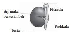 Bagian-bagian biji
