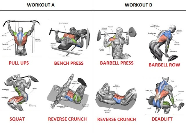 A Full Body Routine Workout That Exercises All The Major Muscle Groups Is Important In Beginning Because It One Of Fastest Ways To Gain Lean