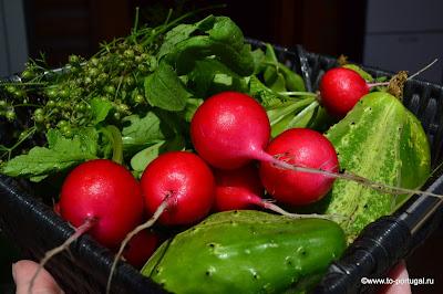 португальские овощи август в португалии