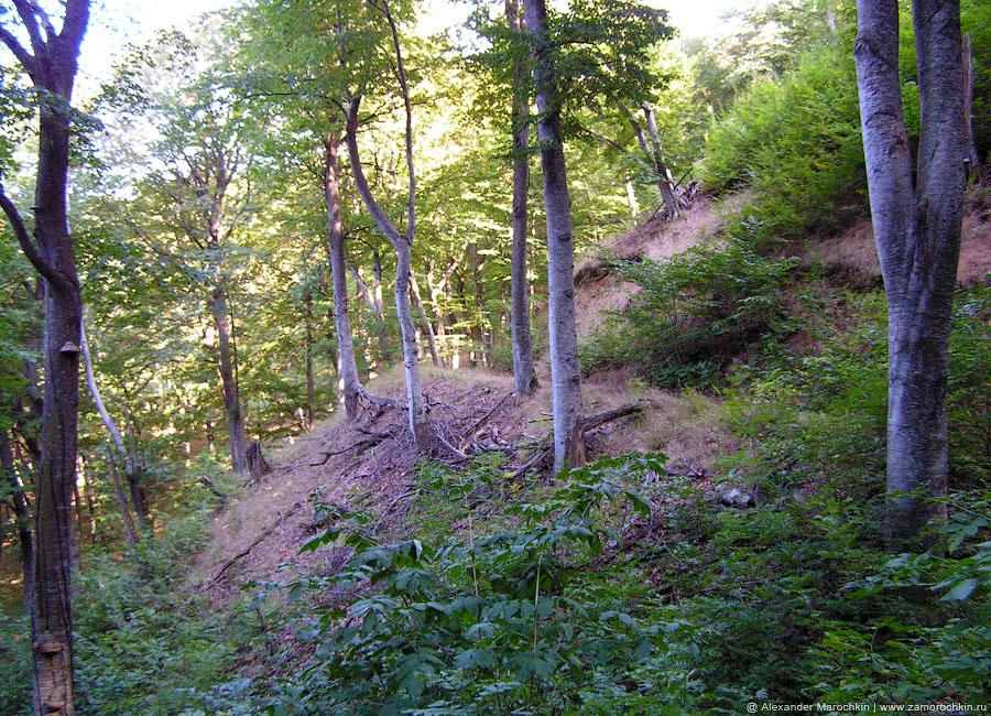 Лесная дорога на горе Бештау