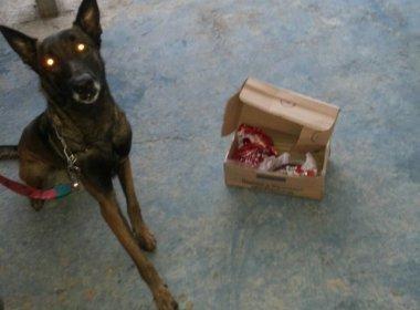 Cão Farejador detecta 300g de haxixe enviado por Sedex