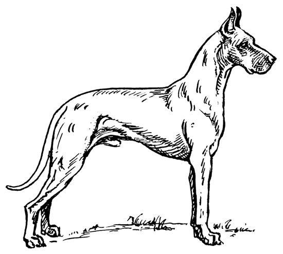 Desenhos para Colorir: Cachorros, cachorrinhos e cachorrões