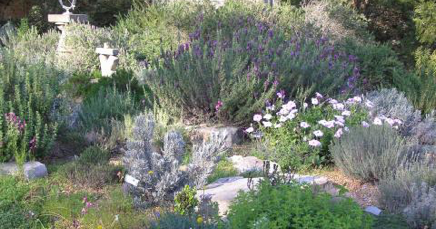 """Fifty Shades of Gray"" in the Cottage Garden"