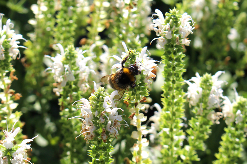 Bees in Piemonte, Italy - travel & style blog