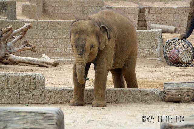 Elefanten Erlebnis-Zoo Hannover