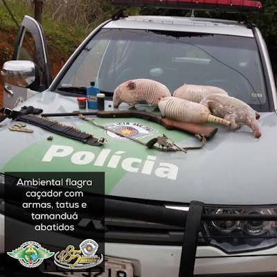 Policia Ambiental  prende caçador com um Tamanduá e três Tatus na Zona Rural em Registro-SP