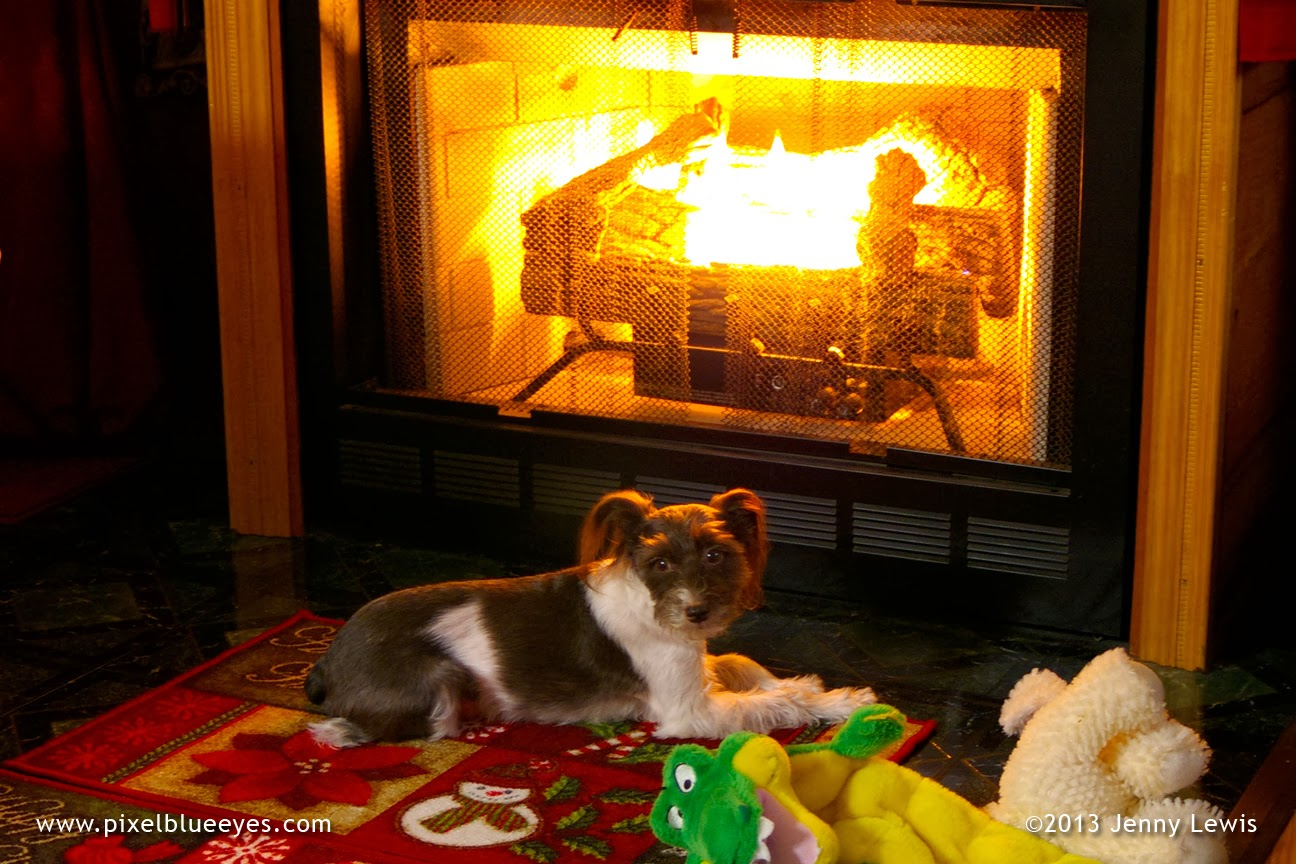 pixel blue eyes her tails of adventure the joy of a warm cozy rh pixelblueeyes com Cozy Fire Cozy Fireplace with Dog