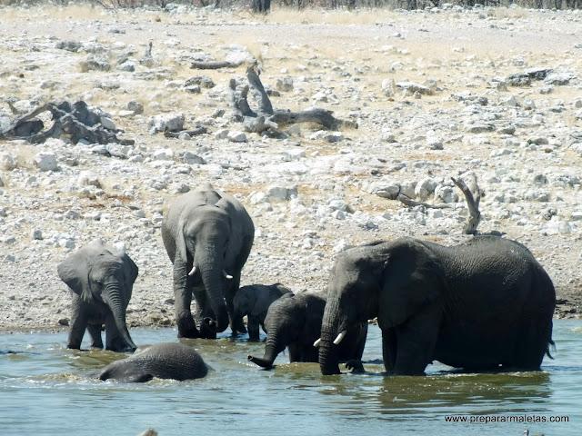 elefantes dando un baño