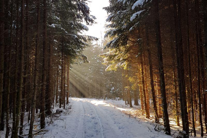 Winterwonderland Winterwald Sonnenstrahlen