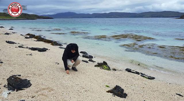 Escocia, Skye Island, coral beach