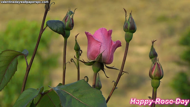 Rose Day Flower