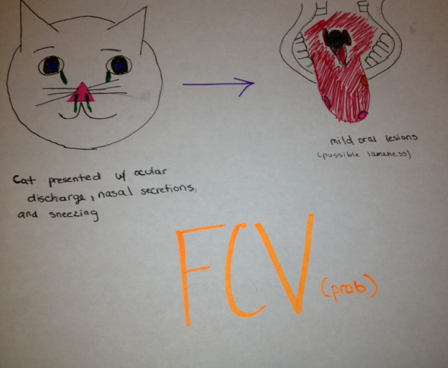 Feline Calicivirus : Case Descriptions Of Virulent