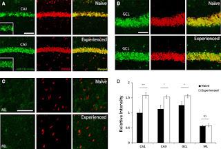 Neuroscience data