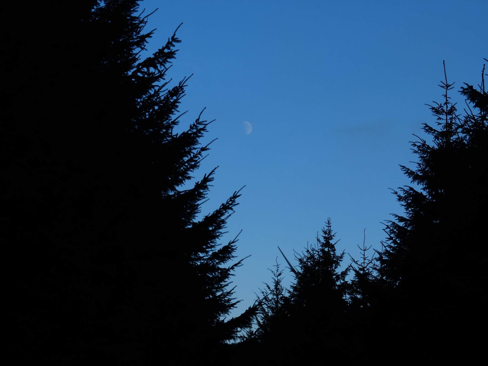 A faint half moon over the silhouette of a forestry in the Boggeragh Mountains.