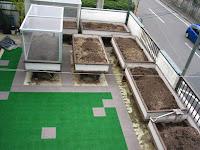 屋上の半坪畑