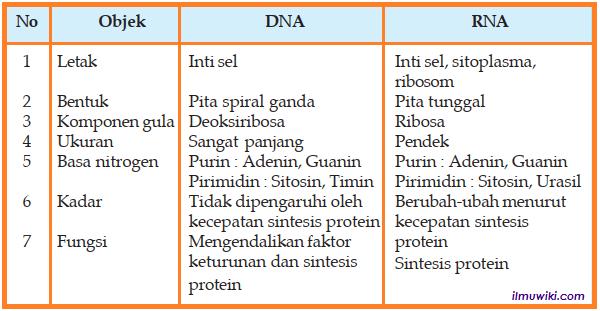 tabel Perbedaan antara DNA dan RNA