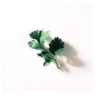 Coriander leaf, coriander leaves, coriander, herb, herbs, fresh, green, health, unique, taste, aroma