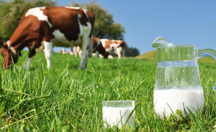 ΚΥΠΡΟΣ Κατεχόμενα: Το αγελαδινό γάλα πιο ακριβό απ' την μπίρα!