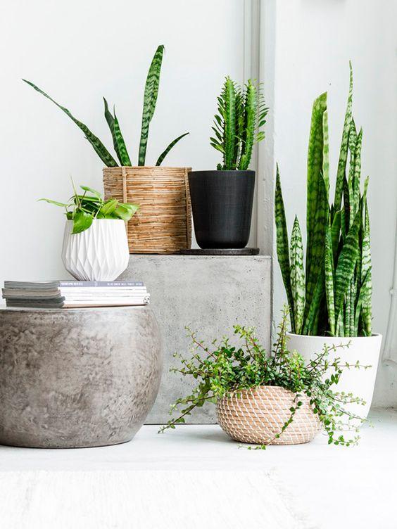 plante9 Flower Pots Houseplants on gardening pots, herb pots, container pots, nature pots, plants pots, bulb pots, green pots, moss pots, roses pots, greenhouse pots, spring pots, succulents pots, cactus pots, orchid pots, nursery pots, annual pots, water pots, bamboo pots, vegetable pots, planter pots,