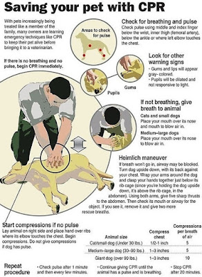 dogs CPR