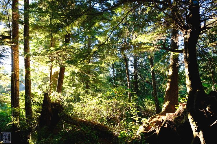 Le Chameau Bleu - Toquin Trail Tofino Ile de Vancouver Canada