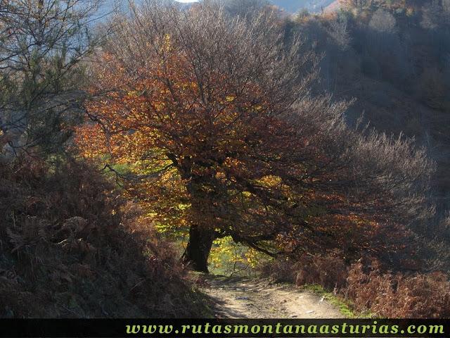 Ruta Víboli Peña Subes y Sen Mulos: Camino a la collada Granceno