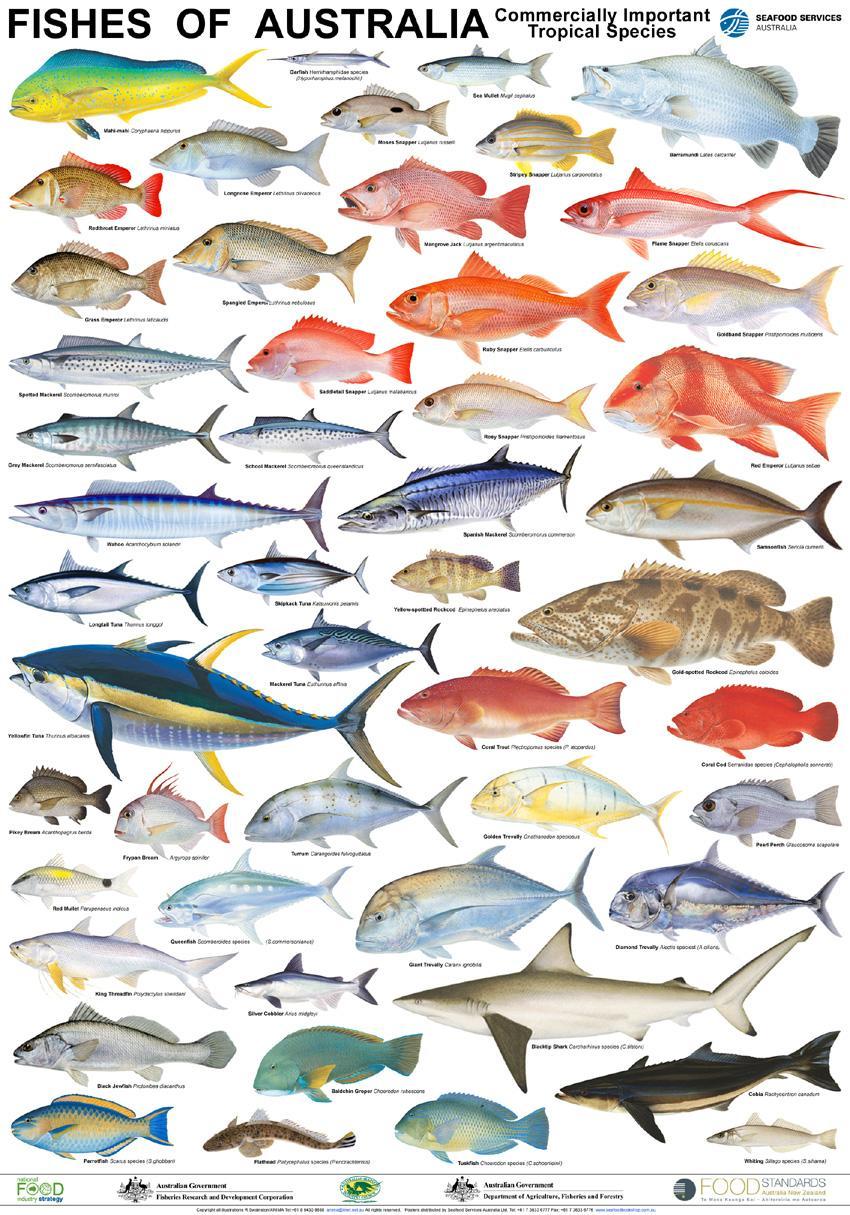 Gambar Pecinta Ikan Bakar Poster Klik Gambarnya ...