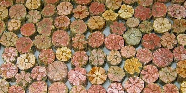 Batu sakura sangat dilindungi di jepang
