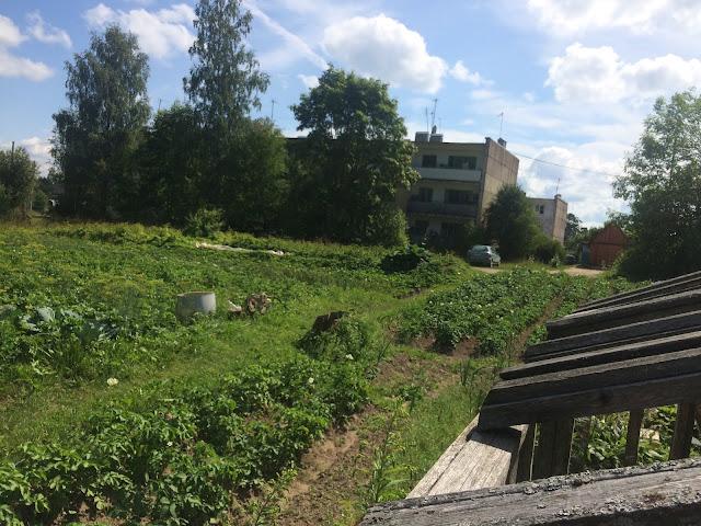 Середина июля 2018 наш сад и огород