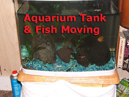 Aquarium Moving